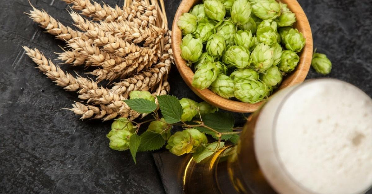 hoa bia có tác dụng gì
